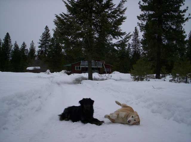 Boydogs on a snowy road, March 2009